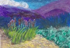 Landscape With Aloe Vera