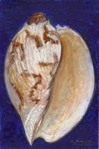 Smooth Sea Shell