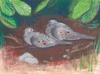 Mourning Doves in the Shade